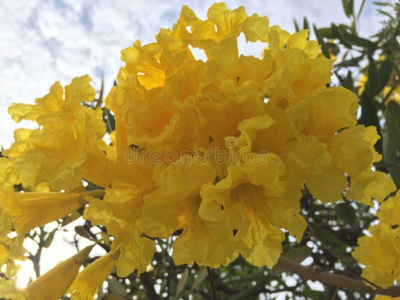 Gele bloem in de blauwe hemel royalty-vrije stock foto