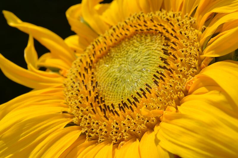 Gele bloem dichte omhooggaand royalty-vrije stock foto's