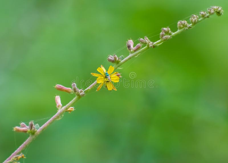Gele bloem en vlieg royalty-vrije stock foto's