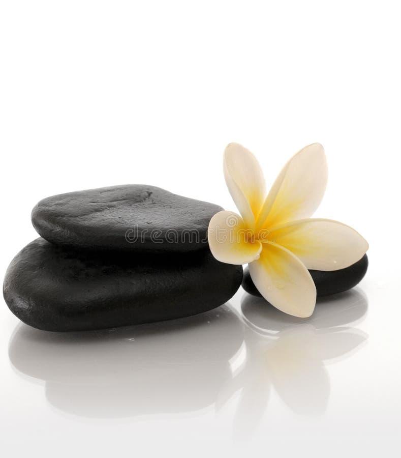 Gele bloem en zen stenen royalty-vrije stock fotografie