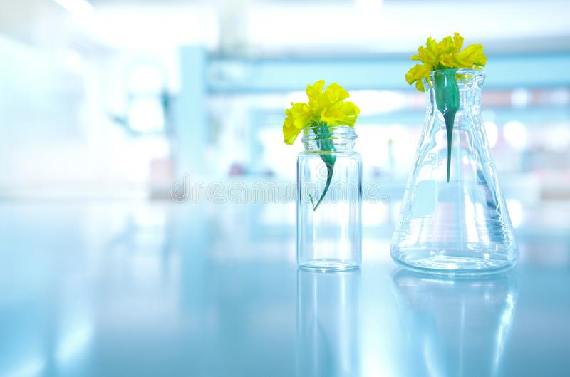 Gele bloem in glasfles en flesje in de wetenschap van de biologieinstallatie royalty-vrije stock foto