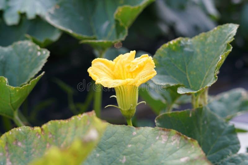 Gele bloem in groene bladeren stock afbeeldingen