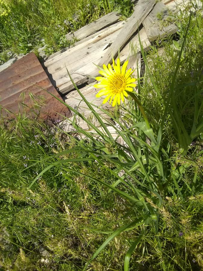 Gele bloem hoogste mening royalty-vrije stock foto's