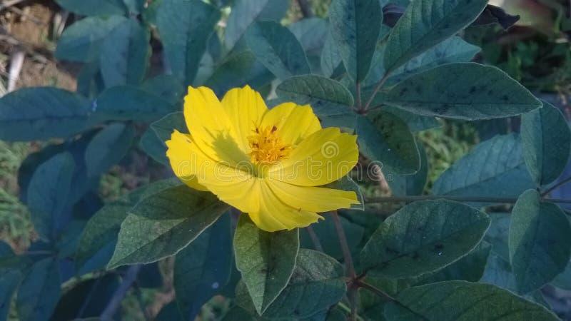 Gele bloem met groen blad stock foto