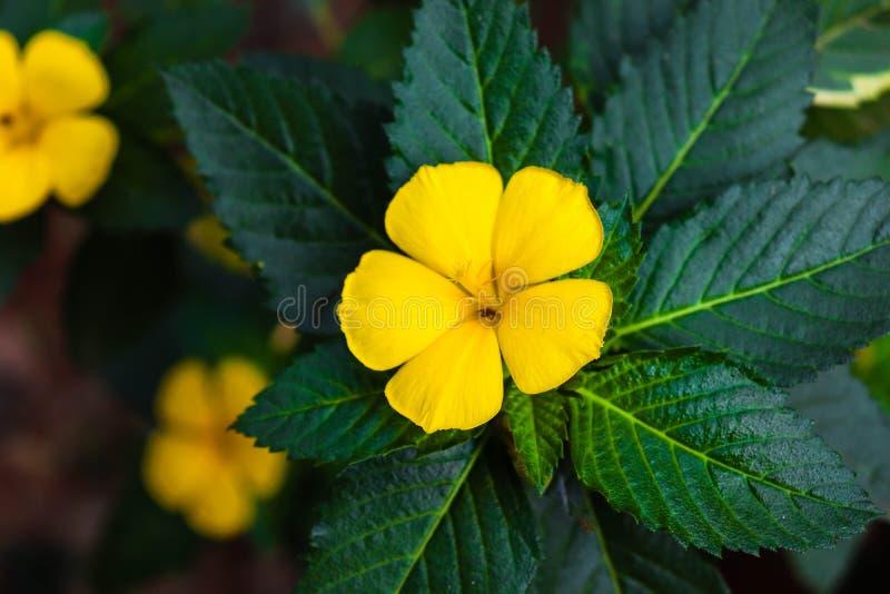 Gele bloem met groene bladachtergrond royalty-vrije stock foto's