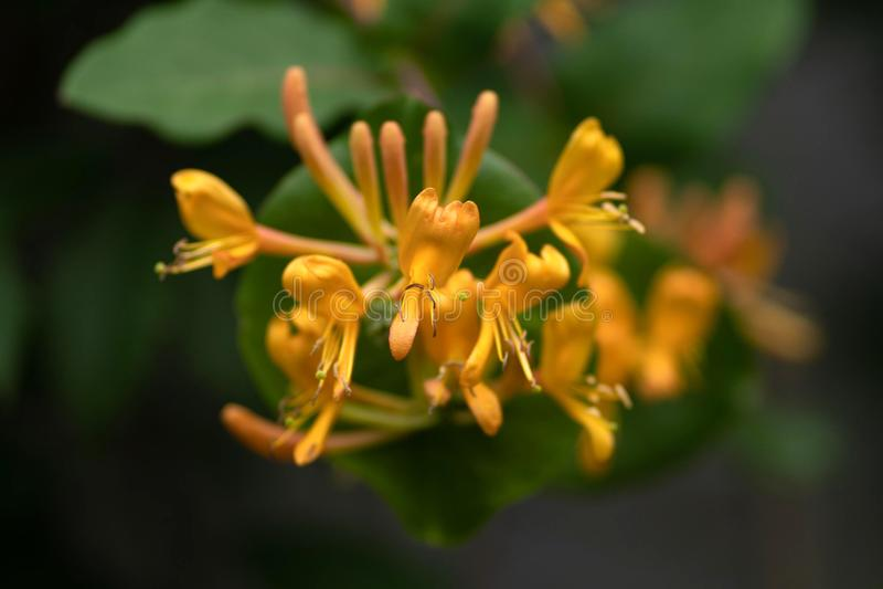 Gele bloem op tak dichte omhooggaand royalty-vrije stock fotografie