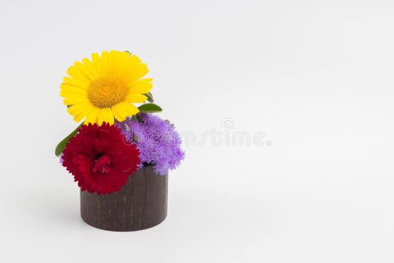 Gele bloem op witte achtergrond royalty-vrije stock foto