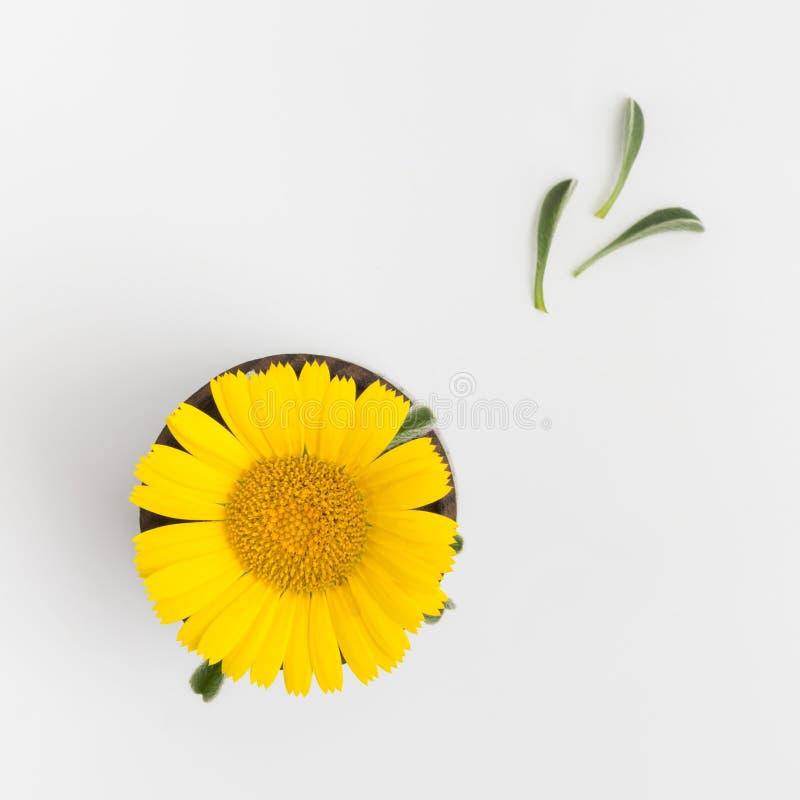 Gele bloem op witte achtergrond royalty-vrije stock afbeeldingen