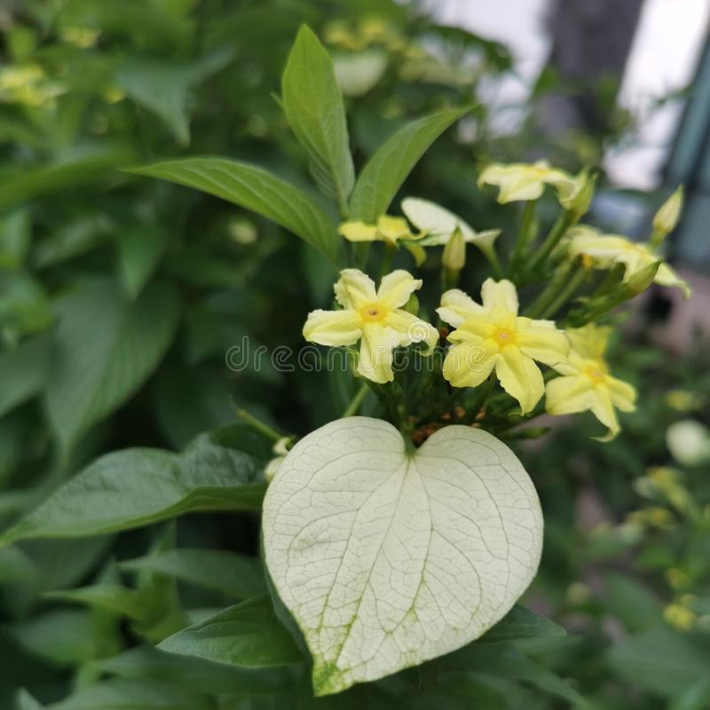 Gele bloem in tuin stock afbeeldingen