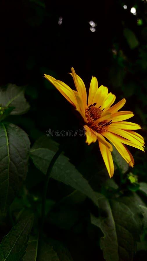 Gele bloem in Zwarte royalty-vrije stock afbeeldingen