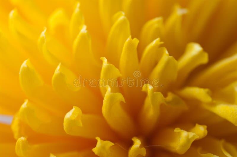 Gele bloemblaadjes royalty-vrije stock foto