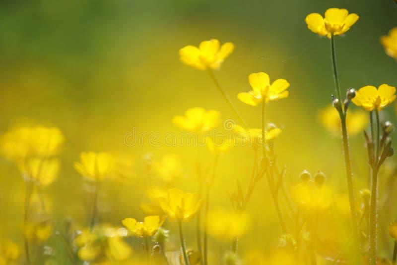 Gele bloemclose-up stock fotografie