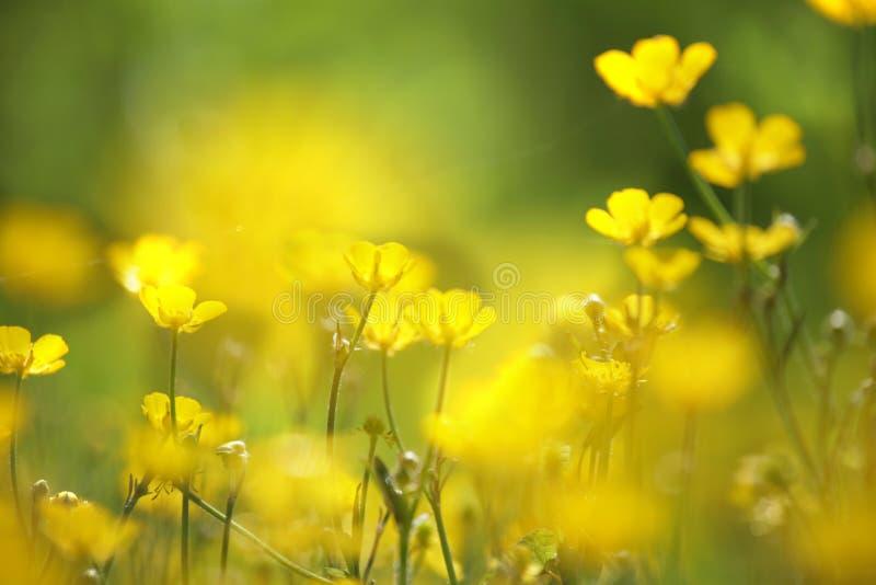 Gele bloemclose-up royalty-vrije stock afbeeldingen