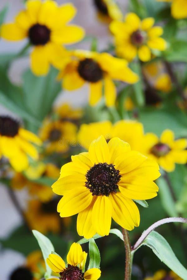 Gele bloemen, royalty-vrije stock afbeelding