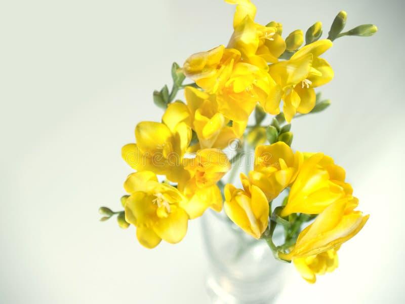 Gele bloemen royalty-vrije stock afbeeldingen