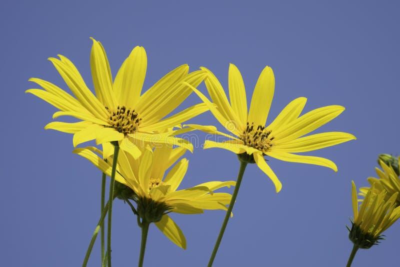 Gele bloemen stock foto's