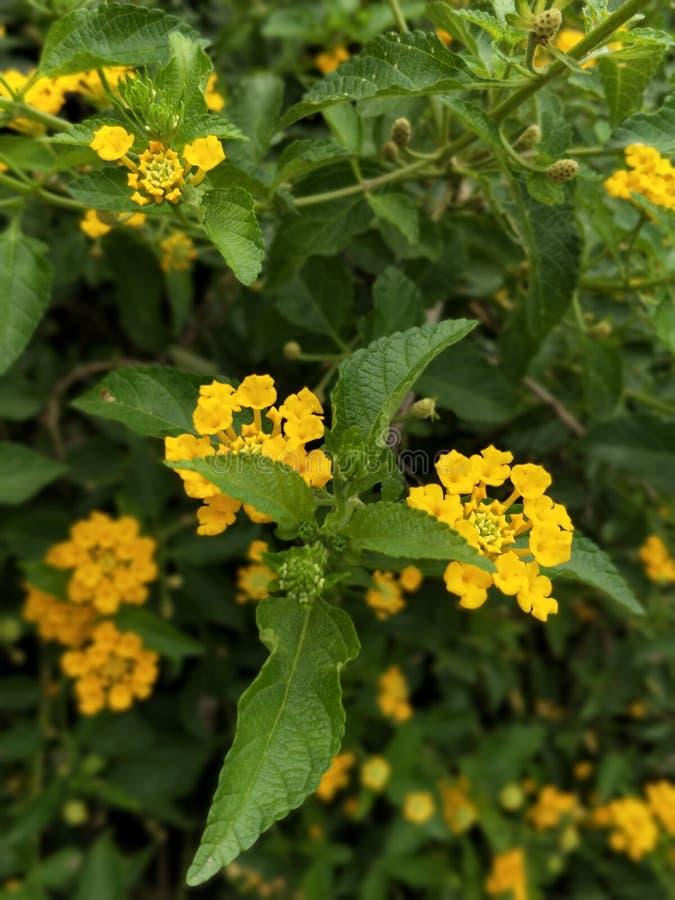 Gele bloemen bij Golconda-fort royalty-vrije stock afbeeldingen