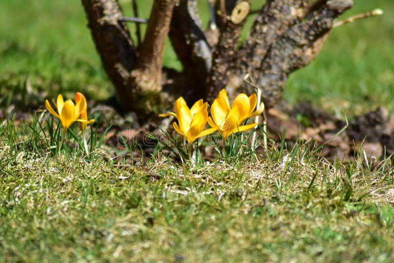 Gele bloemen in de lente stock foto's