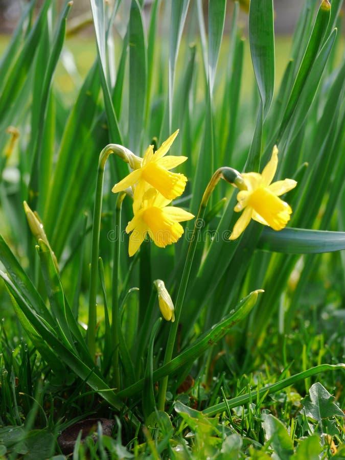 Gele bloemen in de mooie lente stock foto