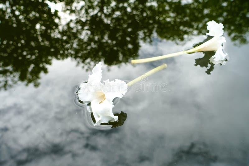 Gele bloemen in de tuin, houd ik van het, houdt het me verjongen mijn huis van hartstochtsbloemen stock foto