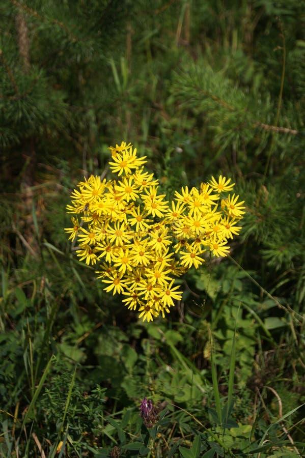 gele bloemen in de vorm van hart royalty-vrije stock foto