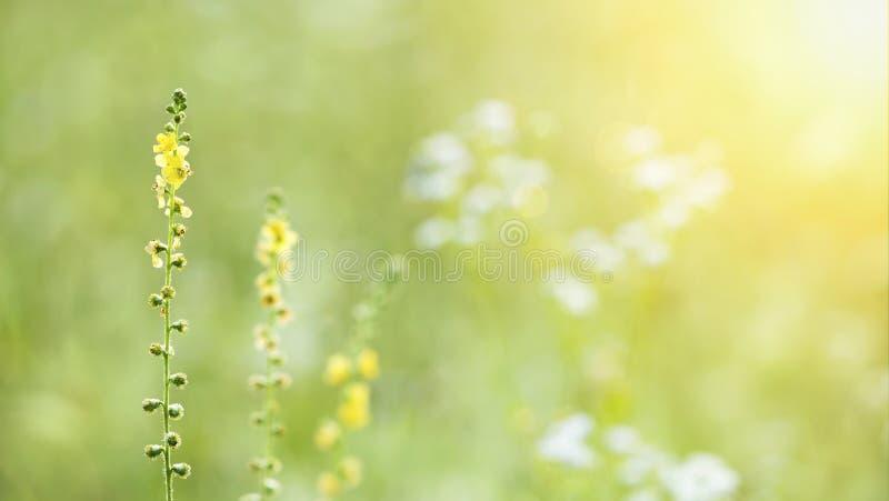Gele bloemen in de de zomerweide royalty-vrije stock foto's