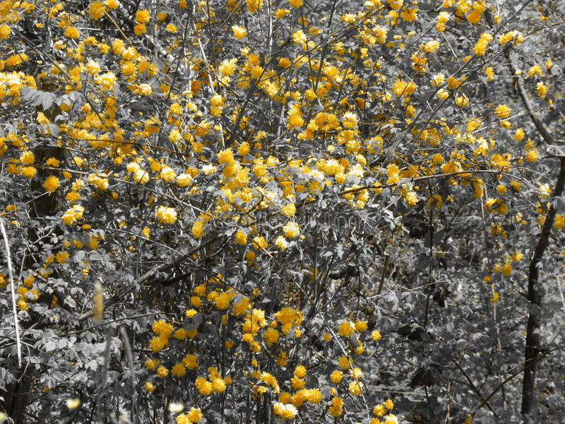 Gele bloemen die in een menigte duidelijk uitkomen stock foto's