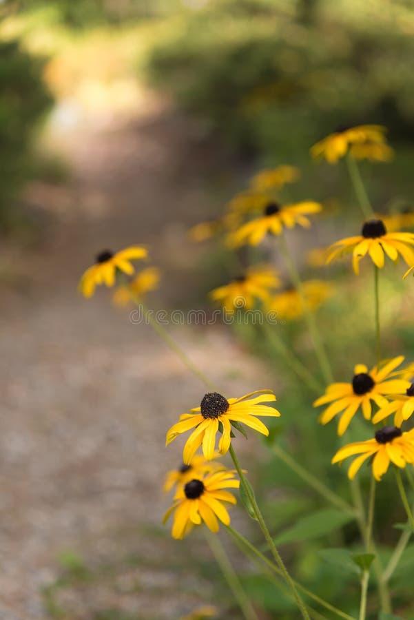 Gele bloemen die naast tuinweg met zonneschijn op eind van weg bloeien royalty-vrije stock foto's