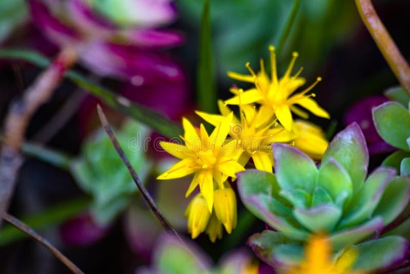Gele bloemen die rond met groen worden omringd royalty-vrije stock afbeeldingen