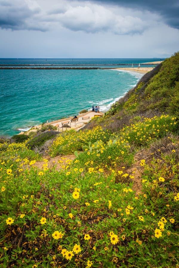 Gele bloemen en mening van de Vreedzame Oceaan van Inspiratie Po royalty-vrije stock afbeeldingen
