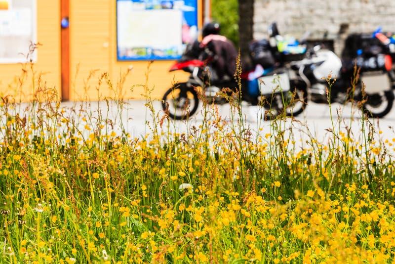 Gele bloemen en motorfietsen op rust plaats stock fotografie
