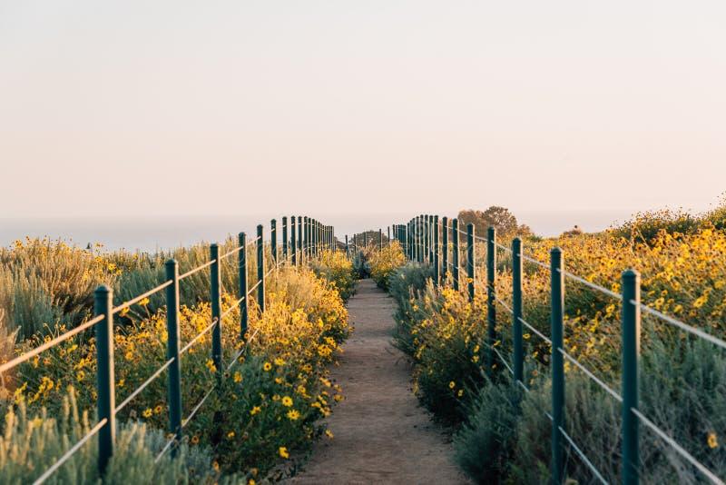 Gele bloemen en sleep bij het Park van de Heuveltop, Dana Point, Oranje Provincie, Californië royalty-vrije stock fotografie