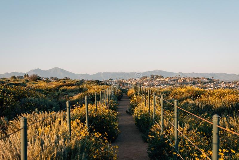 Gele bloemen en sleep bij het Park van de Heuveltop, Dana Point, Oranje Provincie, Californi? royalty-vrije stock afbeeldingen