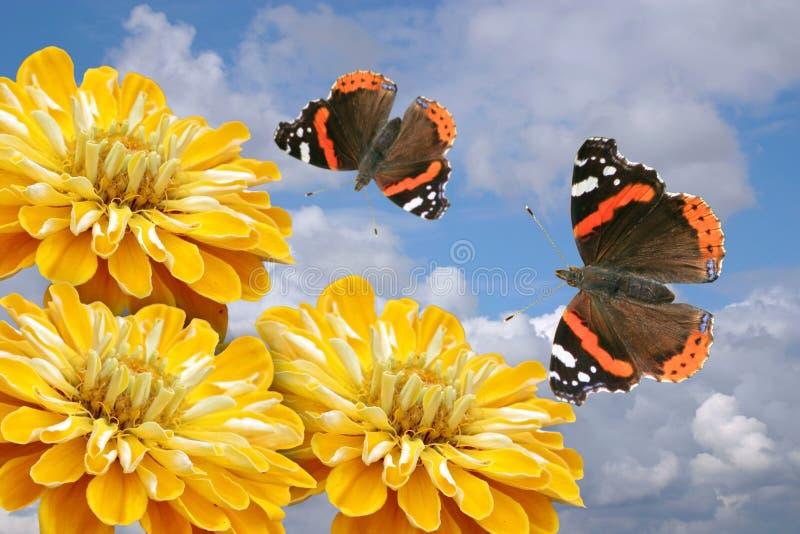 Gele bloemen en vlinders stock fotografie
