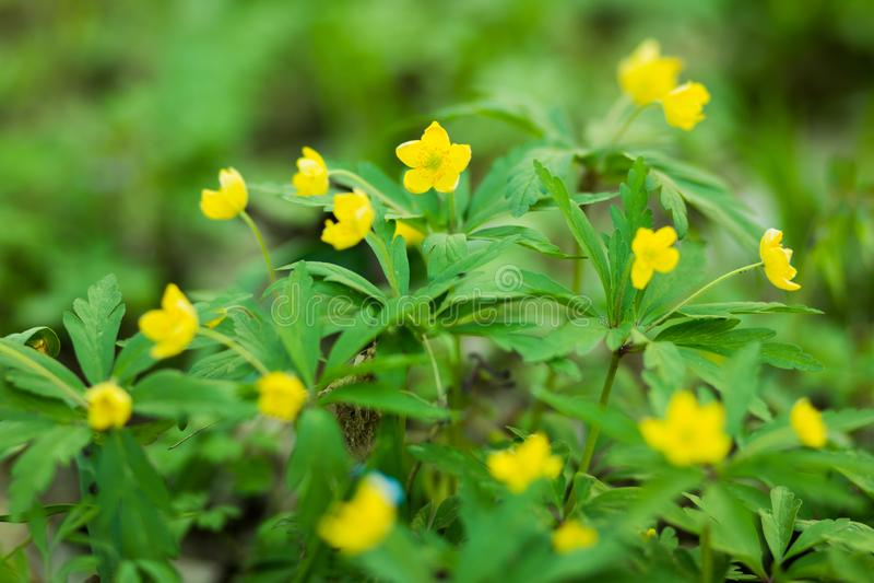 Gele bloemen in het bos royalty-vrije stock foto