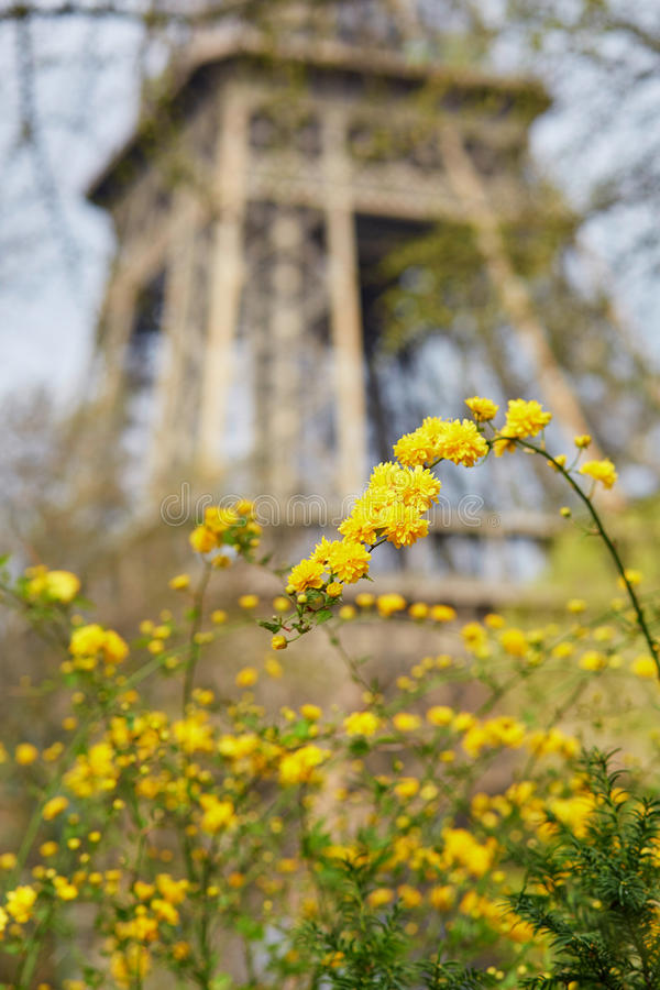 Gele bloemen met de toren van Eiffel in Parijs stock afbeelding