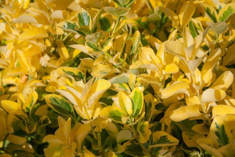 Gele bloemen met groene aanrakingen stock afbeeldingen