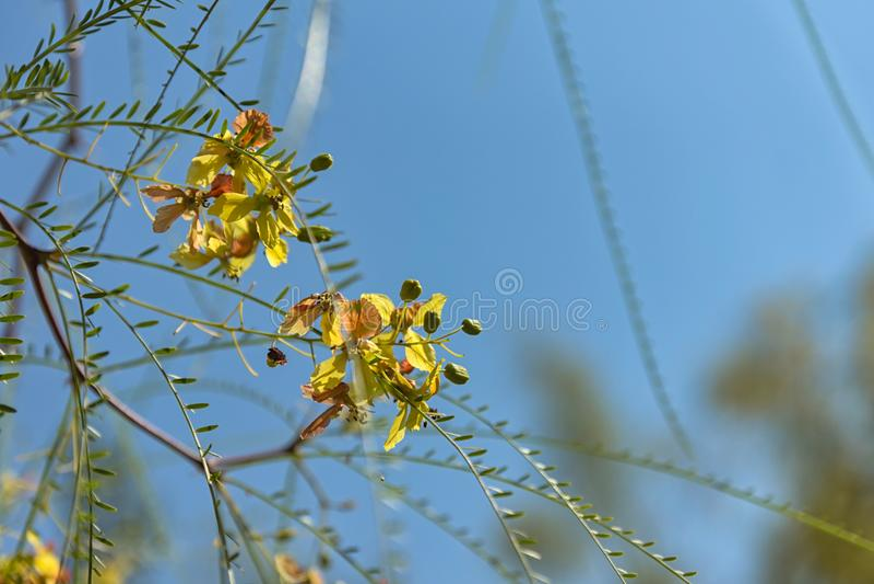 Gele bloemen op blauw canvas royalty-vrije stock foto's