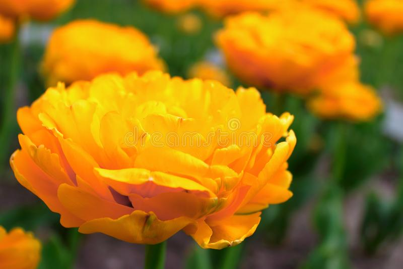 Gele bloemen op een bed royalty-vrije stock afbeeldingen