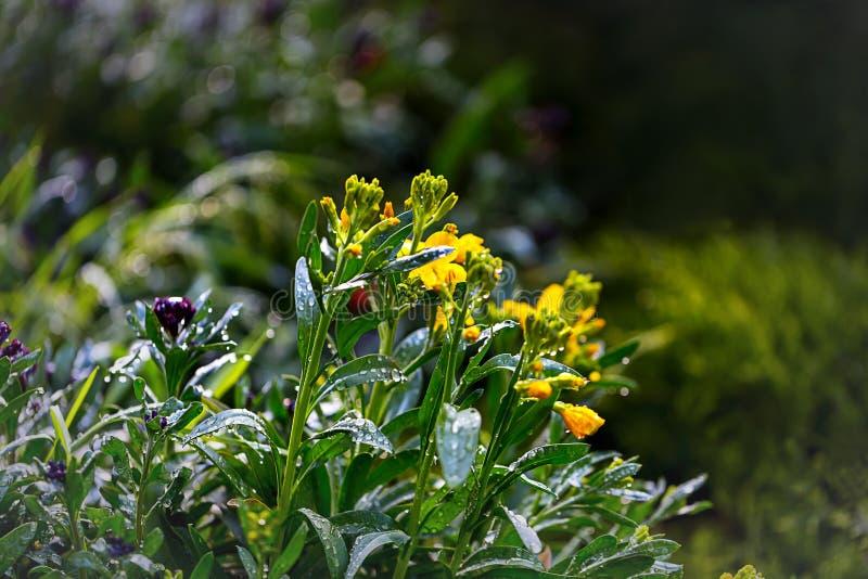 Gele bloemen op een open plek royalty-vrije stock afbeeldingen