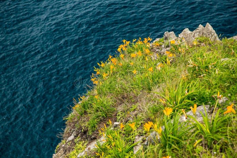 Gele bloemen op het splijten tegen het overzees royalty-vrije stock foto