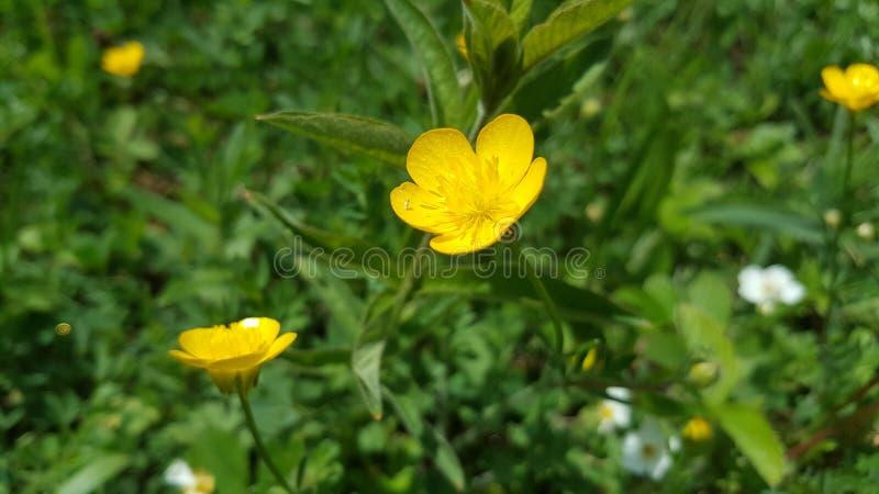 Gele bloemenaard stock afbeeldingen