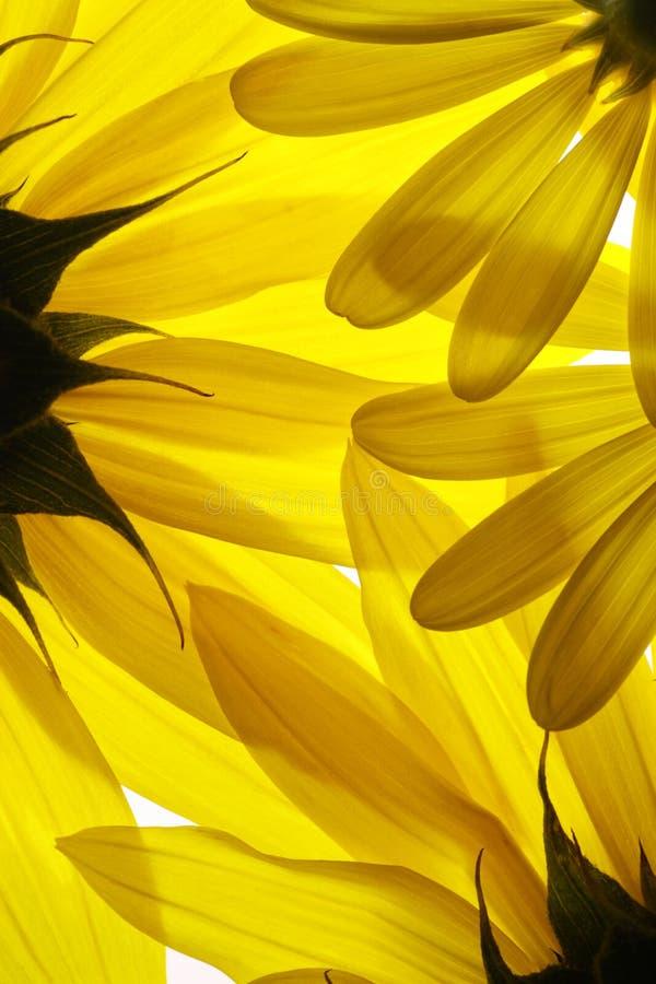 Gele bloemenachtergrond stock foto