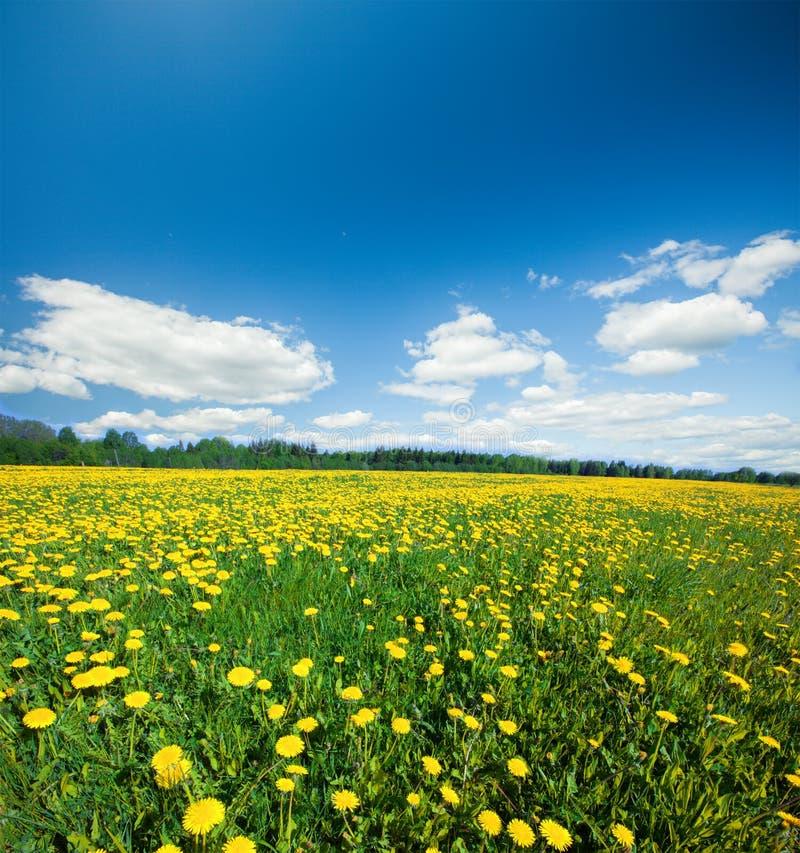 Gele bloemenheuvel onder blauwe hemel stock afbeeldingen