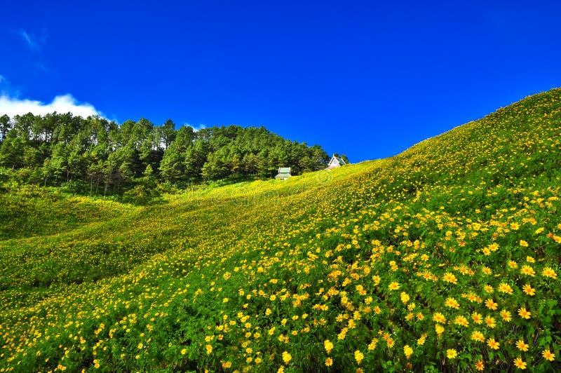 Gele bloemheuvel royalty-vrije stock fotografie