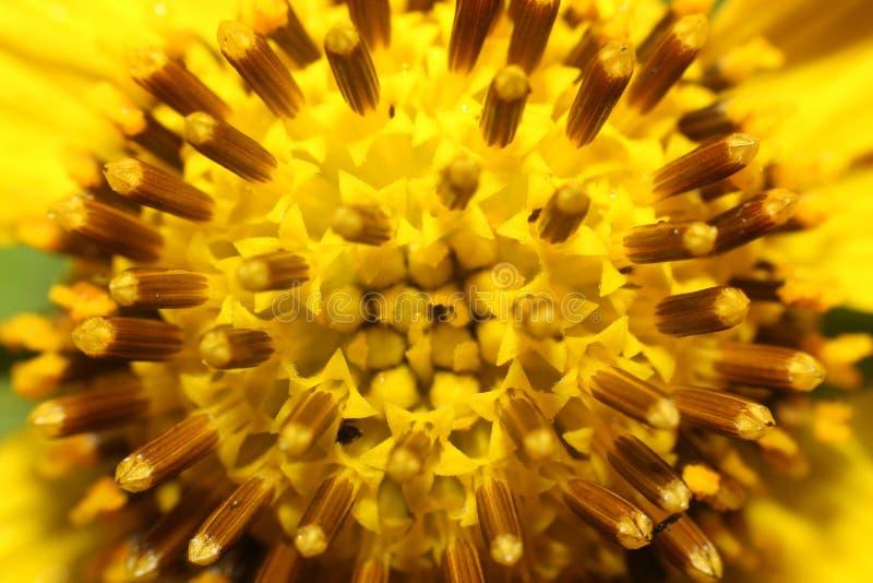Gele bloemmacro royalty-vrije stock foto