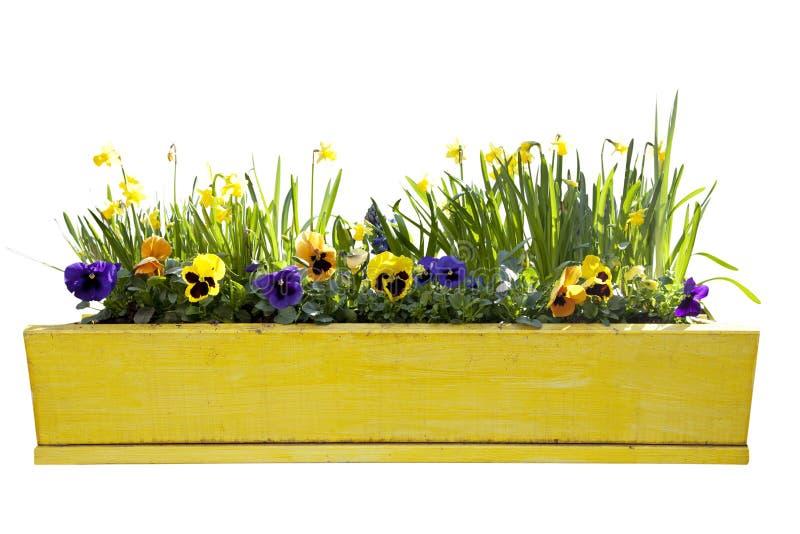 Gele bloempot met gele narcissen royalty-vrije stock foto