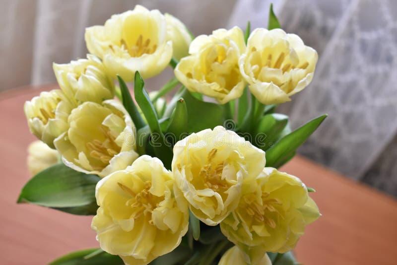 Gele Bloesem op de lentevakantie stock afbeeldingen