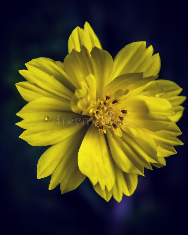 Gele bloesems royalty-vrije stock foto's