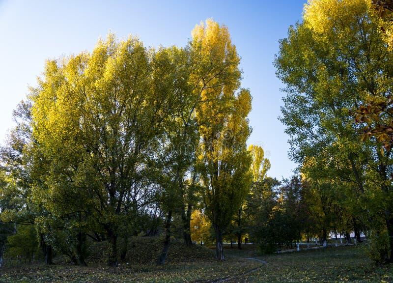 Gele bomen in park royalty-vrije stock fotografie